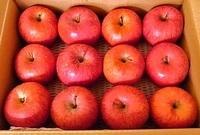 サンふじりんご家庭用