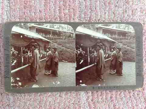 明治 『立体写真 武州 川和虎渓園の菊』埼玉横浜