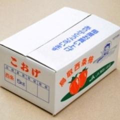 西条柿(赤秀) 10kg 2L 57個