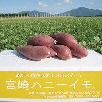 宮崎ハニーイモ(生芋) 5kg