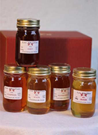 人気定番ハチミツ5瓶