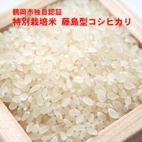特別栽培米藤島型コシヒカリ
