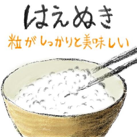 はえぬき(白米・7分・玄米)5kg