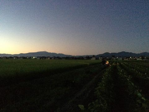 だだちゃ豆、枝豆、茶豆、おつまみ、ビール、在来品種、鶴岡市