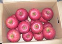 家庭用 りんご 10kg