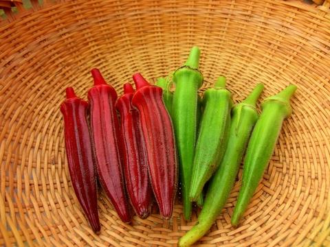 自然栽培・自然農法 オクラ(赤・緑) 80g