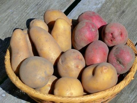 自然栽培・自然農法ジャガイモ(アンデス赤500g・きたあかり500g) 1㎏