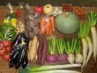 夏秋満喫、自然栽培野菜セット