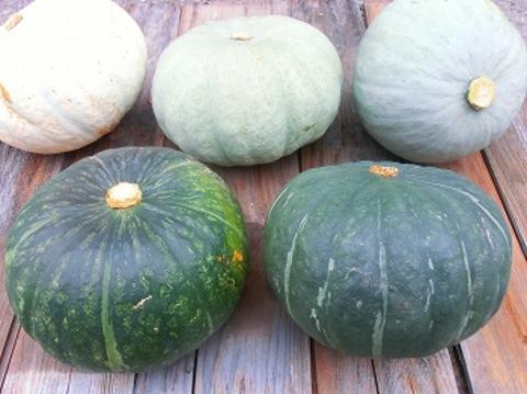 自然農法かぼちゃセット