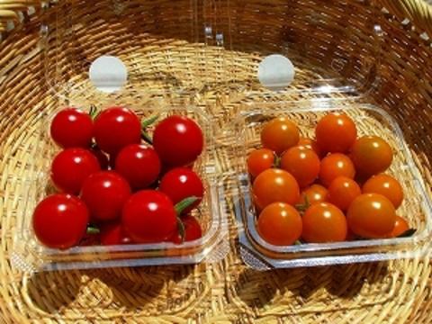 自然農法・自然栽培 野菜セット(夏季) Sサイズ お試しにどうぞ(1.2~1.5kg)