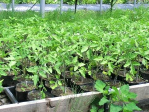 自然栽培 定期購入 野菜セットお申込み