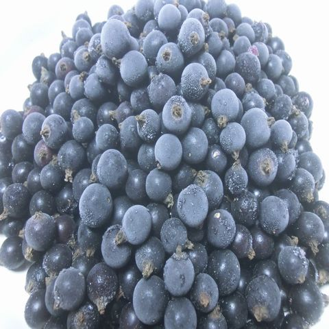自然農法・自然栽培 冷凍カシス(3kg )