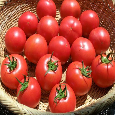 自然農法・自然栽培プラチナ 樹で熟した完熟トマトセット 2㎏(14~18玉)