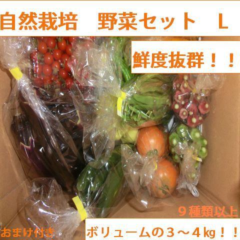 自然農法・自然栽培 野菜セット(夏季) Lサイズ(ボリュームの3~4㎏!!)