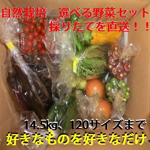 自分で選べる自然栽培  季節の野菜セット(6月頃~11月頃まで) 好きなものを好きなだけ