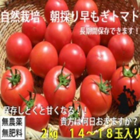 自然農法・自然栽培プラチナ 早もぎトマトセット(2㎏)