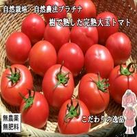 自然栽培完熟トマト