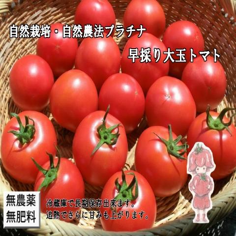 自然栽培早採りトマト