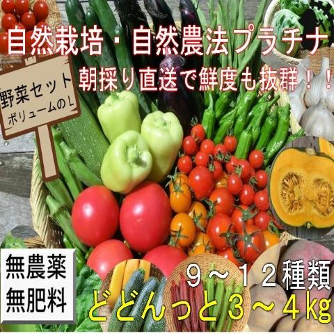自然栽培野菜セットL