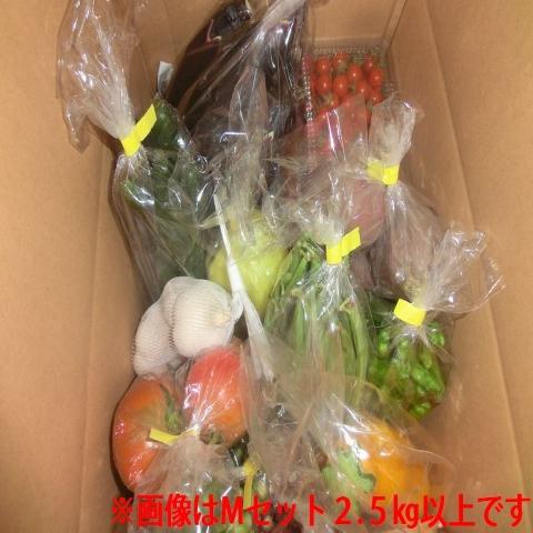 自然栽培野菜セットM