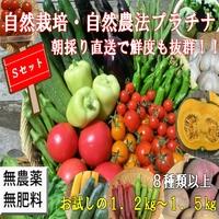 自然農法、無農薬|夏野菜セットS