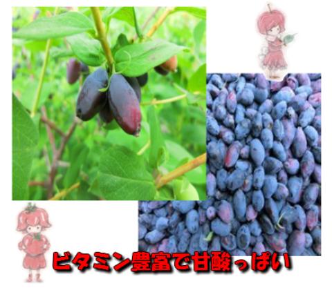自然農法・自然栽培ハスカップ