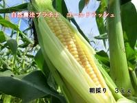 自然農法プラチナ トウモロコシ