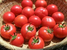 自然農法トマト