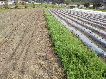 緩衝地帯のある畑