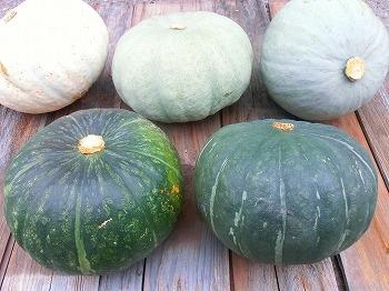 自然農法かぼちゃ