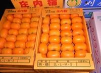 庄内柿10kg規格
