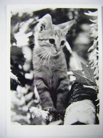 昭和 動物 ペット『映画 子 猫 物語 スチール 写真 3点』