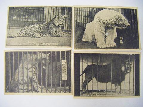 明治後期 ~ 写真 サーカス 見せ物「絵葉書 矢野動物園 13枚一括」