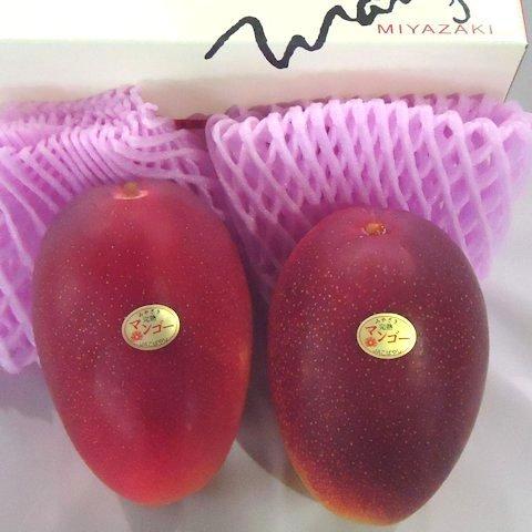 完熟マンゴー白箱(2玉入)