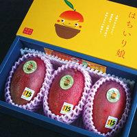 完熟マンゴー(化粧箱入り)