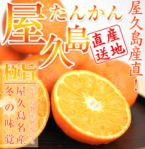 屋久島たんかん家庭用(10Kg)2ケース