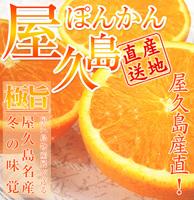 【ラッキーSALE】屋久島ぽんかんLサイズ3ケース(予約受付中)