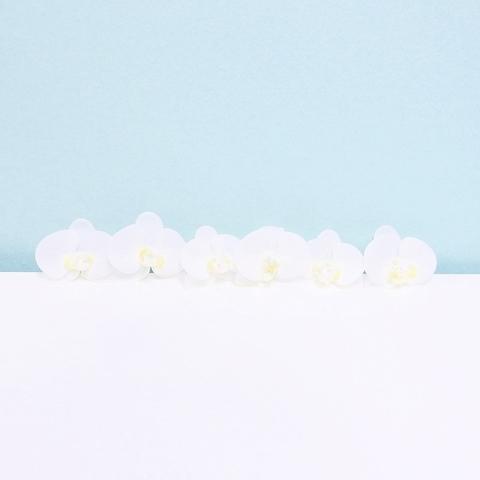 * 【7点セット】髪飾り 胡蝶蘭(ホワイト)*