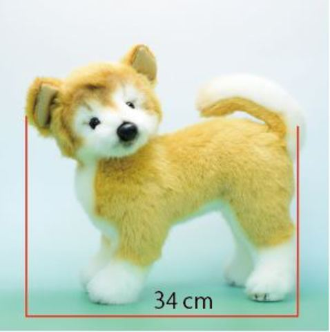 日本製リアル・秋田犬L 34cmW