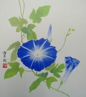 色紙70朝顔(青)・夏・吉岡浩太郎
