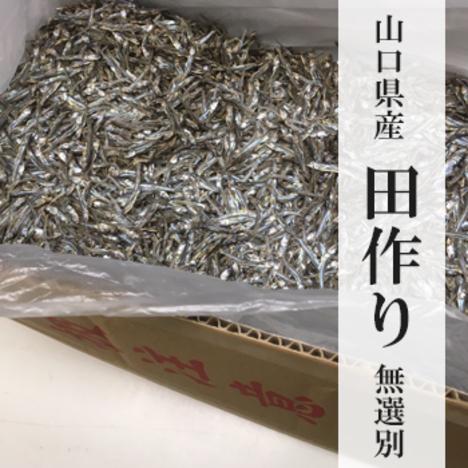 田作り(たづくり)5kg 山口県産