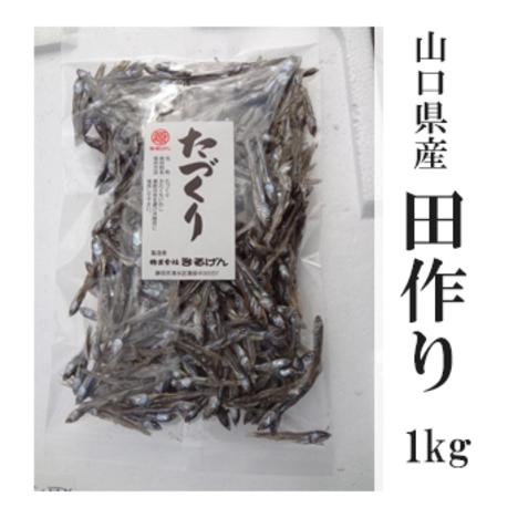田作り(たづくり)1kg 山口県産