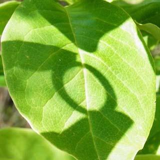 メモリアルリング 木の指輪